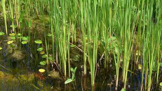 Frosch im Wasser - Tiere, Amphibien, Kröte, Frosch, wechselwarme Tiere, Amphibie, Suchbild