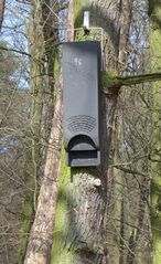 Brutkasten für Fledermaus #1 - Brutkasten, Nisthilfe, Nisthöhle, Nisthilfen, Fledermaus, nisten, brüten, Höhle, Natur, Naturschutz