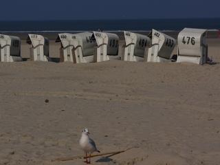 Leere Strandkörbe - Strand, Strandkörbe, Strandkorb, Meer, Möwe, Sandstrand, leer, verlassen, Zahlen, leere Strandkörbe