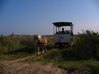 Pferdebahn - Pferd, Wagen, Pferdebahn, Verkehrsmittel, Schienentransport, Nostalgie, Zugpferd, ziehen, Tourismus