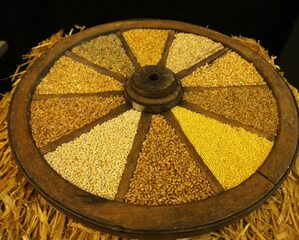 Getreide - Getreide, Korn, Körnerfrüchte, Grundnahrungsmittel, Ernährung, Viehfutter, Süßgräser, Landwirtschaft, Lebensmittel