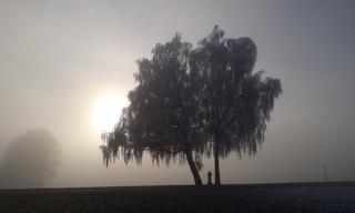 Birken im Nebel #2 - Birke, Herbst, Nebel, Raureif, Stimmung, Gegenlicht, Luft, Luftfeuchtigkeit, Dunst, Wolke, Tau, Niederschlag, Sicht, Sichtbehinderung, Wasser, diesig, trüb, neblig, Wetter, Wetterphänomen