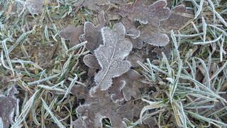 Eichenblatt - Eichenblatt, Winterstimmung, Reif, Rauhreif, Resublimation, Eiskristalle, Luftfeuchtigkeit