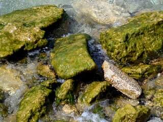 Algen - Algen, Wasser, Photosynthese, Protisten