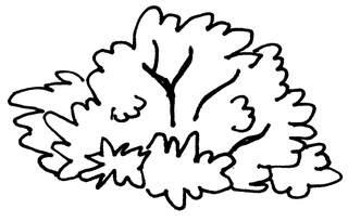 Busch - Busch, Anlaut B, Garten, Strauch, Gehölz, Wörter mit sch, Anlaut St