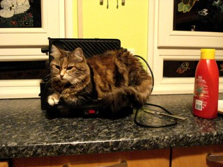 Noch'n Toast... - Katze, lustig, Tierverhalten, Hauskatze, Haushaltsgeräte, Wärme, warm halten, Toaster, Schreibanlass, witzig, Humor