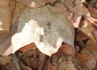 Spinne in der Sonne - Spinne, Gliederfüßer, Spinnentiere, Häutungstiere, krabbeln, acht, Beine, haarig, Haare