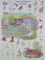 Tiere und Pflanzen im Garten - Tier, Pflanze, Garten, Singvogel, Wildtiere, Insekten