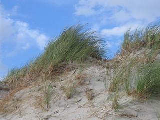 Düne - Wattenmeer, Nordsee, Küste, Sand, Düne, Wind, Sandverwehung, Küstenschutz, Strandhafer, Wurzelgeflecht