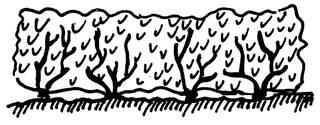 Hecke - Hecke, Anlaut H, Gebüsch, Garten, Sichtschutz, Gehölze, Sträucher, Wörter mit ck