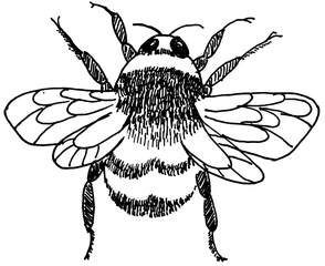 Hummel - Hummel, Insekten, Tiere, Anlaut H, Wörter mit Doppelkonsonanten, Flügel