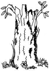 Stamm - Stamm, Baumstamm, Anlaut St, Wörter mit doppeltem Mitlaut, Holz, Wald