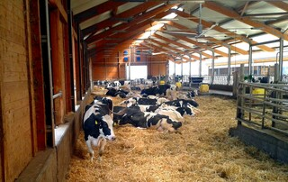 Kuhstall - Kuh, Kuhaltung, Kuhstall, modern, moderner Kuhstall, moderne Rinderhaltung, Rind, Rinderhatlung, Rinderstall