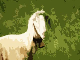 Schaf - Schaf, Wiese, digiatale Malerei, digital, Computerkunst, Computergrafik, künstlerische Technik