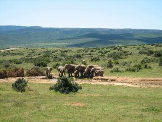 Elefantenfamilie - Elefant, Afrika, Herde, Dickhäuter, schwer, Rüssel, grau, Stoßzahn, Elfenbein, runzlig, Runzel, Falte, faltig, stark, Wasserloch