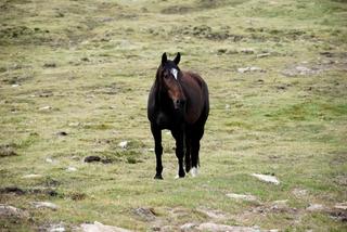Pferd - Tier, Pferd
