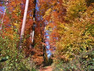 Herbst - Herbstfarben, Herbst, Blattfärbung, Sonne, Himmel, Herbstlaub, Laub, Blätter, bunt