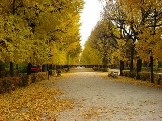 Allee im Herbst - Allee, Herbst, Fluchtpunkt, Perspektive, Laub, Verfärbung