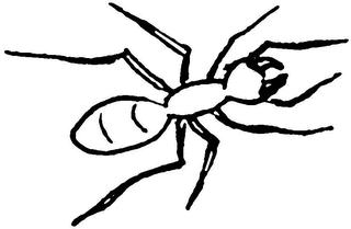 Ameise (1) - Ameise, Insekt, Wald, Anlaut A, Wörter mit ei