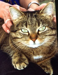 Katze - Tier, Haustier, Katze, Augen, Katzenauge, streicheln