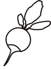 Radieschen - Radieschen, Wurzel, rosa, scharf, Anlaut R, Gemüse, Wurzelgemüse