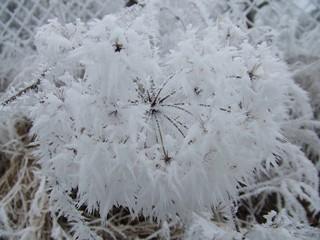 Raureif - Winter, Eis, Schnee, Raureif, weiß, Pflanze, Niederschlag, fest, Resublimation, Luftfeuchtigkeit, nadelförmig, Eiskristall, bizarr, Wetter, Kristall, Nebel