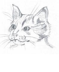 Katze - Haustier, Katze, Kater, Anlaut K, Kopf, Wörter mit tz