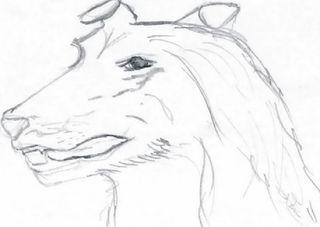 Hund Collie - Tier, Haustier, Hund, Hunderasse, Collie