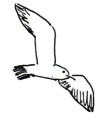 Möwe - Möwe, Natur, Tier, Vogel, fliegen, Anlaut M, Anlaut V, Wörter mit ö