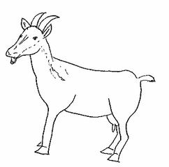 Ziege - Ziege, Haustier, Bauernhof, Euter, Ziegenmilch, Horn, Hörner, Ziegenbart, Anlaut Z