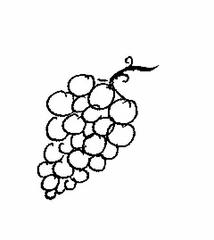 Weintraube - Traube, Trauben, Weintraube, Weintrauben, Wein, Anlaut W, Winzer, Reben, Weinstock, Obst, Früchte