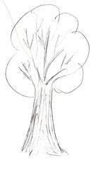 Baum - Gehölz, Baum, Laubbaum, Anlaut B