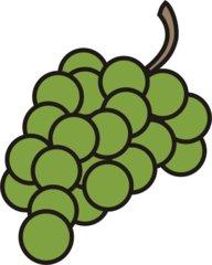 Weintraube - Traube, Trauben, Weintraube, Weintrauben, Wein, Anlaut W, Winzer, Reben, Weinstock, Obst, Früchte, Frucht, grün