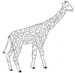 Giraffe - Giraffe, Afrika, Anlaut G