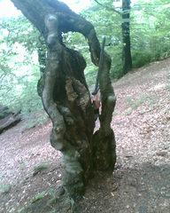 Geborstener Baum mit Schwert - Baum, Mythos, Märchen, Abenteuer, Teutoburger, Wald, Schreibanlass, Artus, Sage