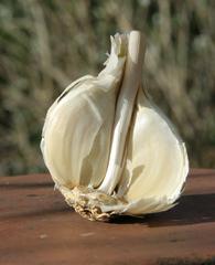 angebrochene Knoblauchknolle - Knoblauch, Gewürzpflanze, Heilpflanze, Knobi, Arzneipflanze, krautig, Zwiebelgeächs, Knoblauchzehe