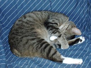 Schlafende Katze - Entspannung, Katze, schlafen, Schreibanlass, Katzen, Kater