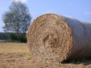Strohballen - Stroh, Getreide, Ernte, Spätsommer, Rundballen, rund, rollen, Zylinder, Mathematik, Volumen, Oberfläche
