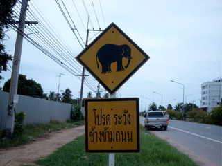 Achtung Elefanten kreuzen - Verkehrsschild, Schild, Elefant, andere Schrift, Linksverkehr, Warnschild, gelb-schwarz, Thailand, Quadrat, Viereck