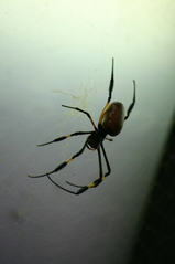 Spinne - Spinne, Insekt, Spinnennetz