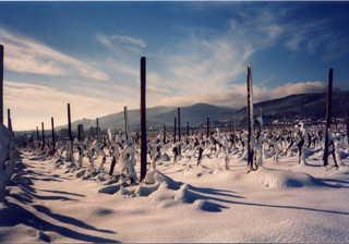Winterweinberge - Weinberge, Reben, Weinstock, Winter, Pfalz, Neustadt/Weinstraße, Deutsche Weinstraße, Schnee, Winter