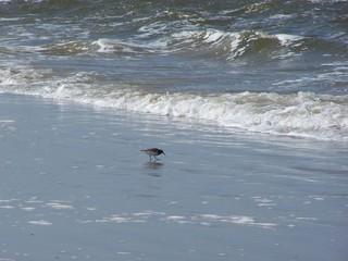Allein gegen die Wellen - Vogel, Strand, Wellen, Watt, Nordsee, Meer, St.Peter-Ording, Gischt