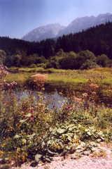 Grimming im Sommer - Grimming, Dachstein, Alpen, Österreich, Steiermark, Sommer, Berge