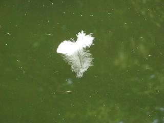 Feder - Feder, Wasser, leicht, Spiegelung, Ruhe, Meditation