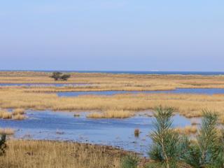 Anlandung Darßer Ort - Anlandungszone, Ablagerung, Wind, Düne, Meer, Ostsee, Salzwasser, Landgewinnung, Sedimentation