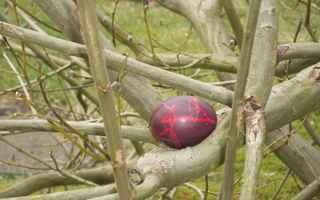 Ei im Baum - Osterei, Fest, Brauchtum, Ei, Ostern, Zweige, versteckt