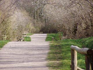 Wege#1 - Wege, Weg, Meditation, Frühling