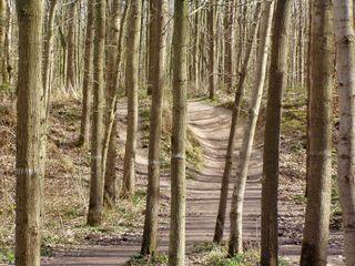 Wege#3 - Wege, Meditation, Wald, Weg, Baumstämme