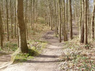 Wege#4 - Wege, Weg, Frühling, Wald, Meditation, Frühblüher, Mischwald, Baumstämme