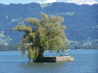 Insel mit Trauerweide - Baum, See, Gemäuer, Bodensee, blau, Himmel, Boot, Weide, Trauerweide